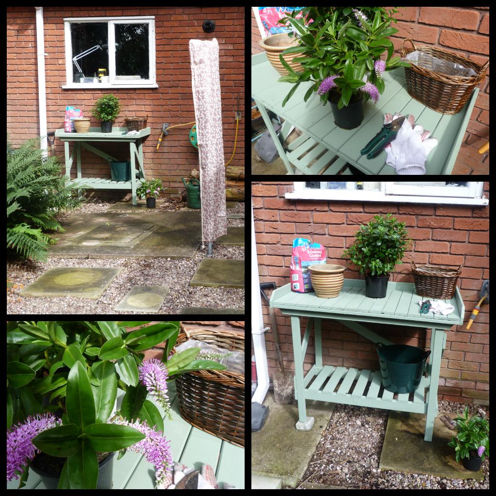 Wilko Garden Colour Willow | Garden | Pinterest