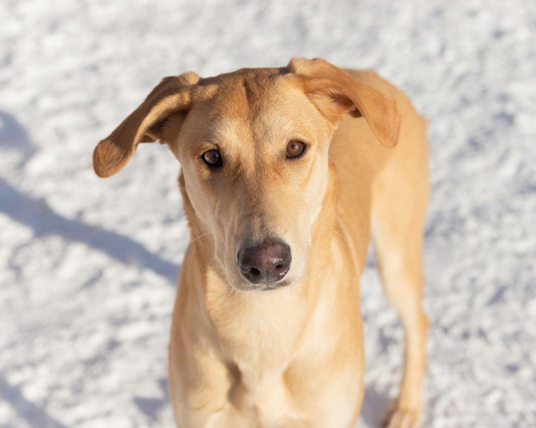 Adopt lumi on in 2020 dog adoption retriever retriever mix