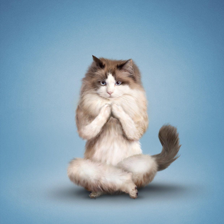Поздравления любимого, картинки смешных поз йоги