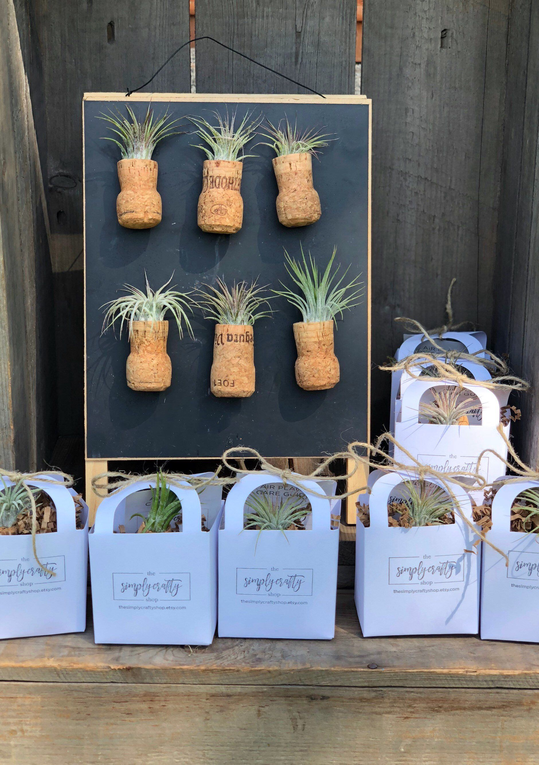 bulk magnetic champagne cork air plant favors prosecco gifts bridal shower favor wedding