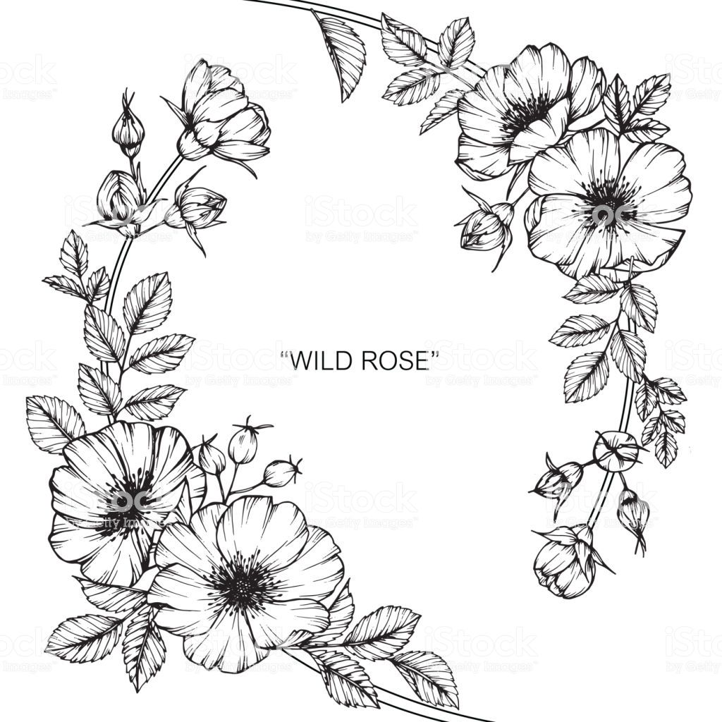 Hand Drawing And Sketch Wild Rose Flower Black And White