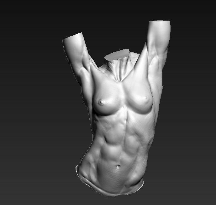 ArtStation - female torso study , Adam Daroszewski