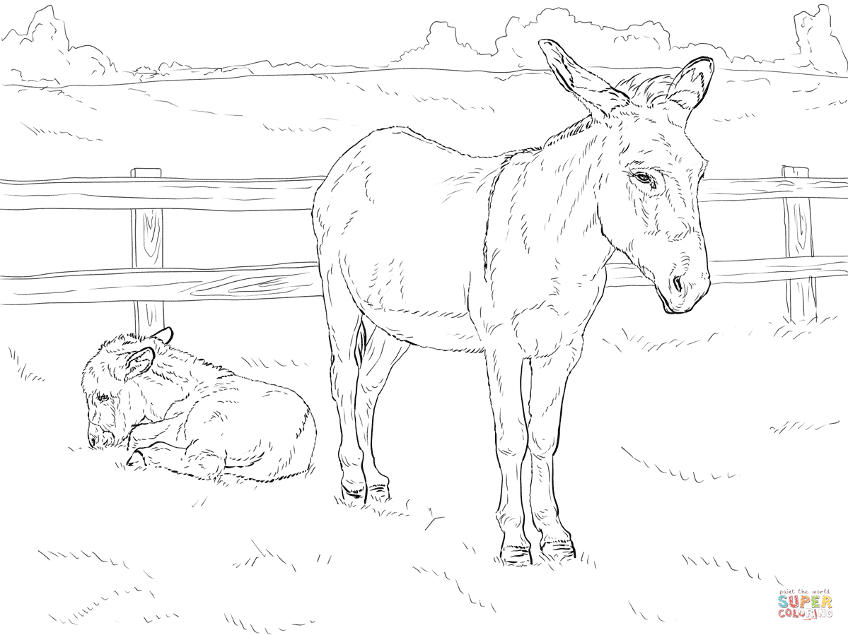 Donkey With Baby Horse Coloring Pages Baby Coloring Pages Farm Animal Coloring Pages
