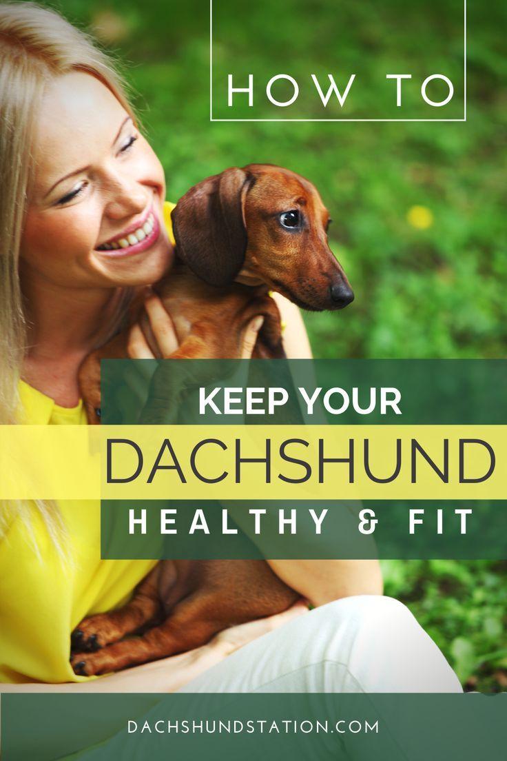 Best feeding schedule for your dachshund in 2020