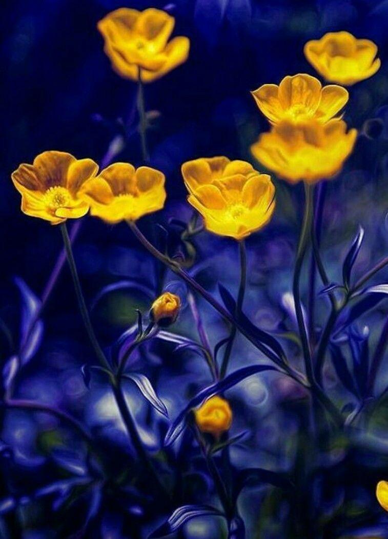 Blackcoral4you Art Pinterest Flowers Rare