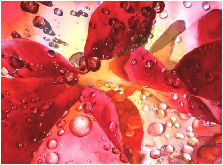 Raindrops On Roses Diane Morgan Transparent Watercolor On 300 Lb
