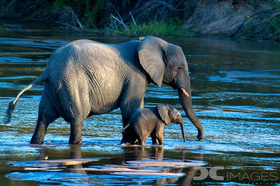 Beautiful elephant in water picture
