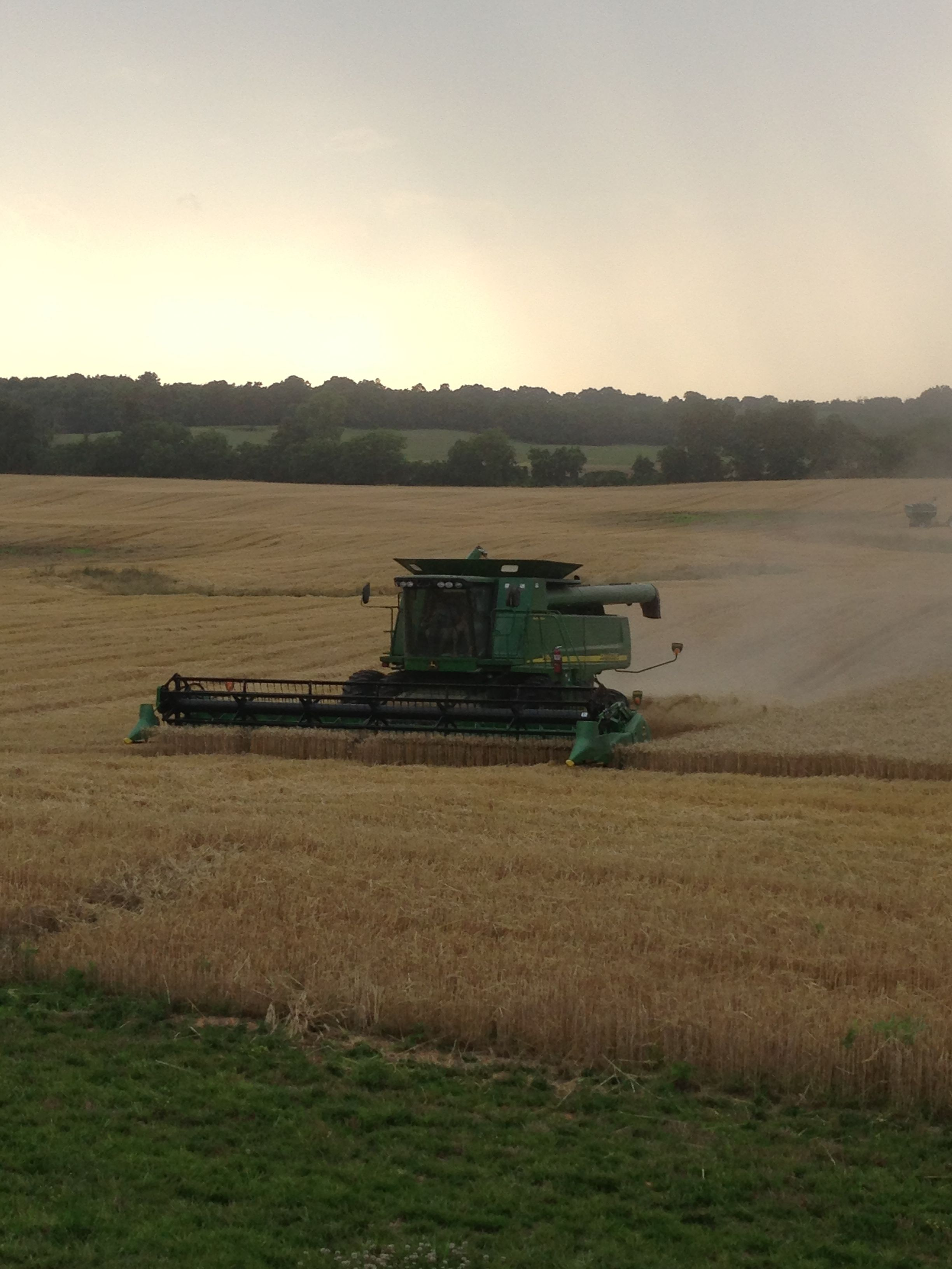 Harvesting wheat with a John Deere
