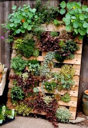 vertical wall pallet planting anything but a pot