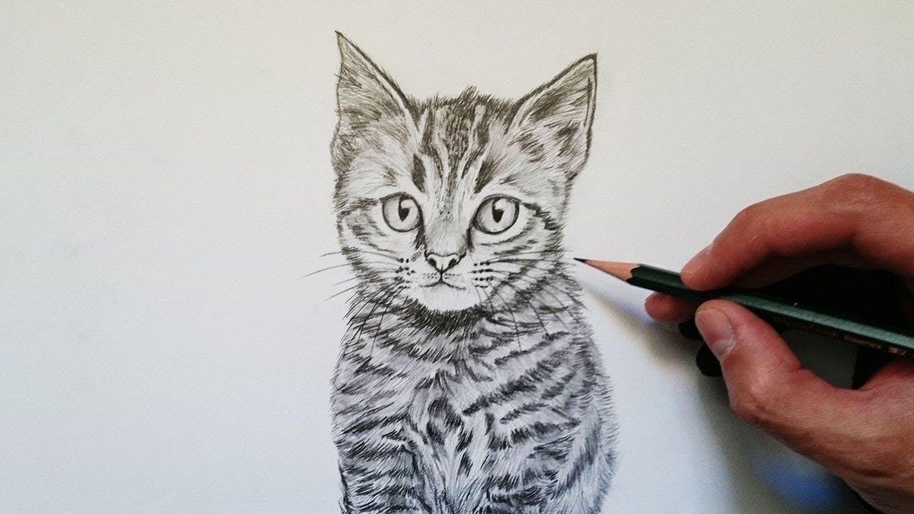 Cómo Dibujar Un Gato Realista Explicado Paso A Paso Como Dibujar Un Gato Cómo Dibujar Dibujos De Gatos