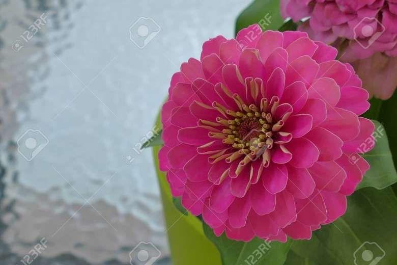 16 Inspiring Por Garden Flower