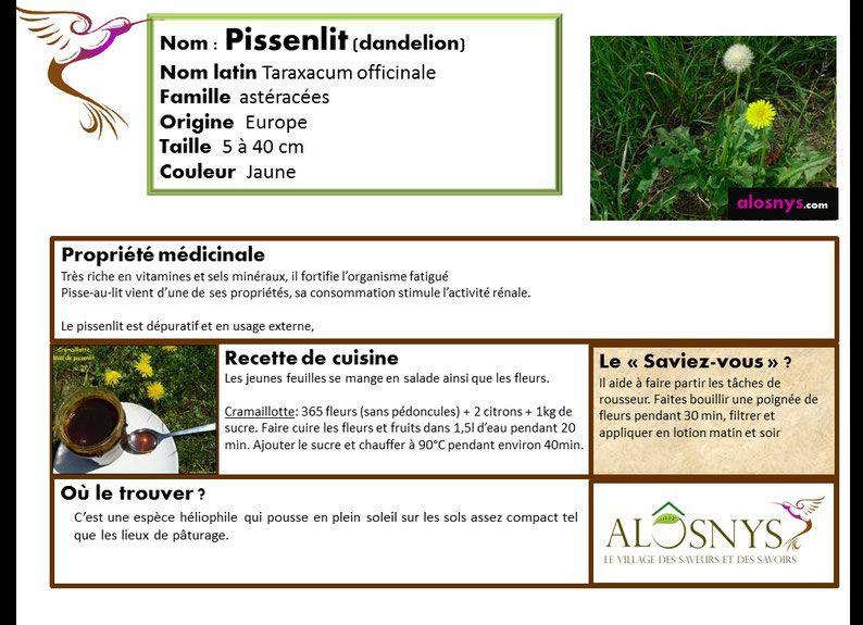 Pin by Amandine LECLERC on jardinage Pinterest - ajouter une piece a sa maison