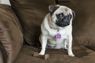 How To Get A Smell Out Of A Suede Couch Dog Smells Suede Couch Pet Odors