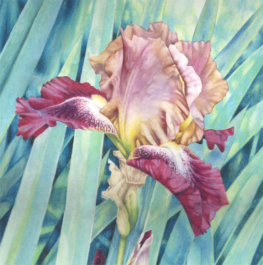 Ilfullxfull770341312qomdg 900906 nature pinterest artisan watercolour painting bearded iris original by daffodilstudio izmirmasajfo