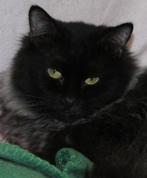 Adopt Lillian on Adoption, Cute animals, Cat lovers