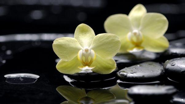 цветы, орхидеи, фаленопсис, желтые, камни, плоские, черные ...