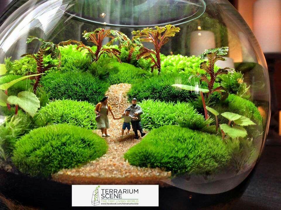 mahmut k rn terrarium pinterest terraria gardens and plants. Black Bedroom Furniture Sets. Home Design Ideas