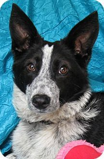 Pin By Samantha Castle On Animals Dogs Pets Collie Dog
