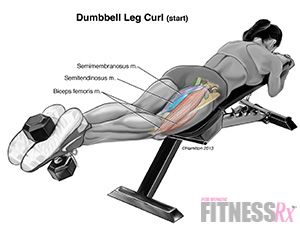 Lying Dumbbell Leg Curls
