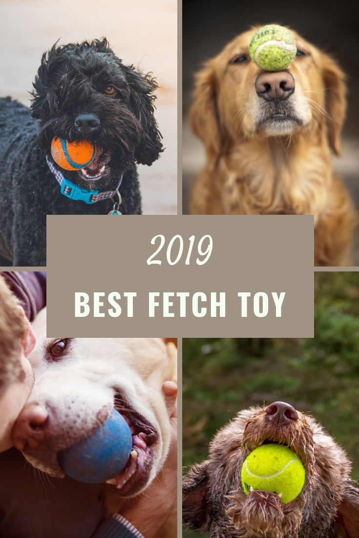 Best Pet Camera And 10 Must Have Gadgets For Your Dog 2019