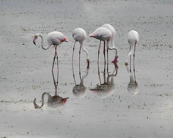 Flamingoes - 8x10 Fine Art Photograph Flamingo Print - Africa, Kenya on Etsy by ShutterShark, $18.00