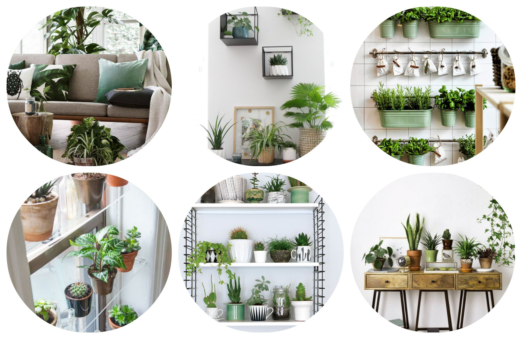 Urban Jungle Inspiratie : Kamerplanten zijn terug! is jouw woning als urban jungle proof? wij