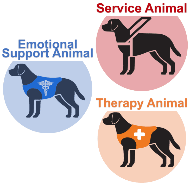 Service Animal Emotional Support Animal Esa Therapy Animal Certify A Therapy Dog Emotio Emotional Support Dog Emotional Support Animal Therapy Animals