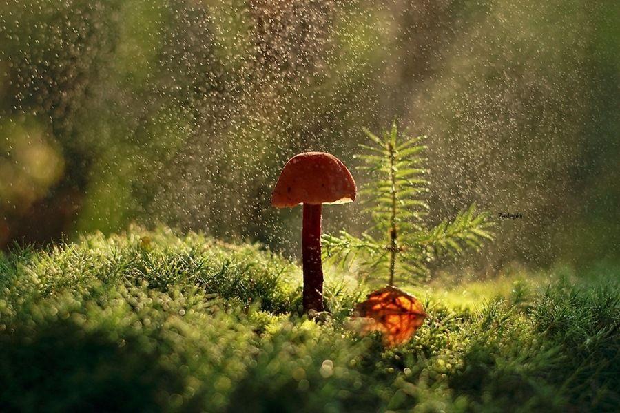 35PHOTO - Олег Зкл - Дождь.   Oleg ZKL