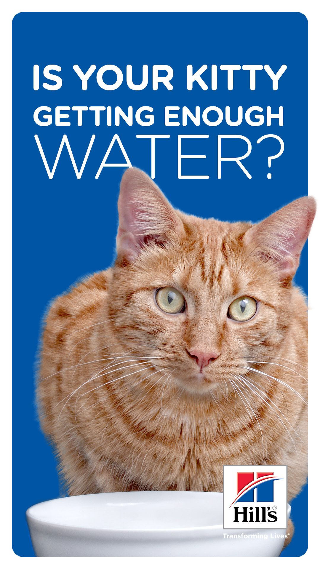 Keeping Your Cat Hydrated If She S Not Drinking Water Cats Cat Drinking Cat Care