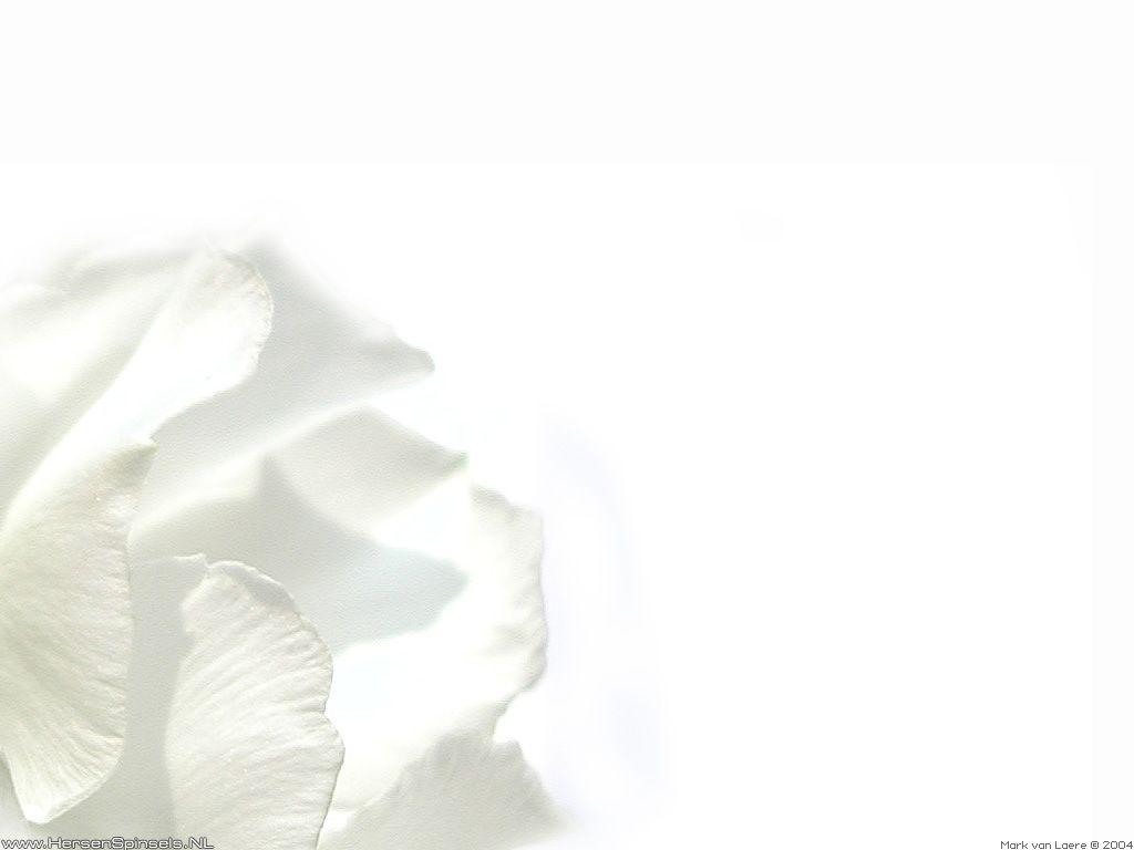 white - Cerca con Google