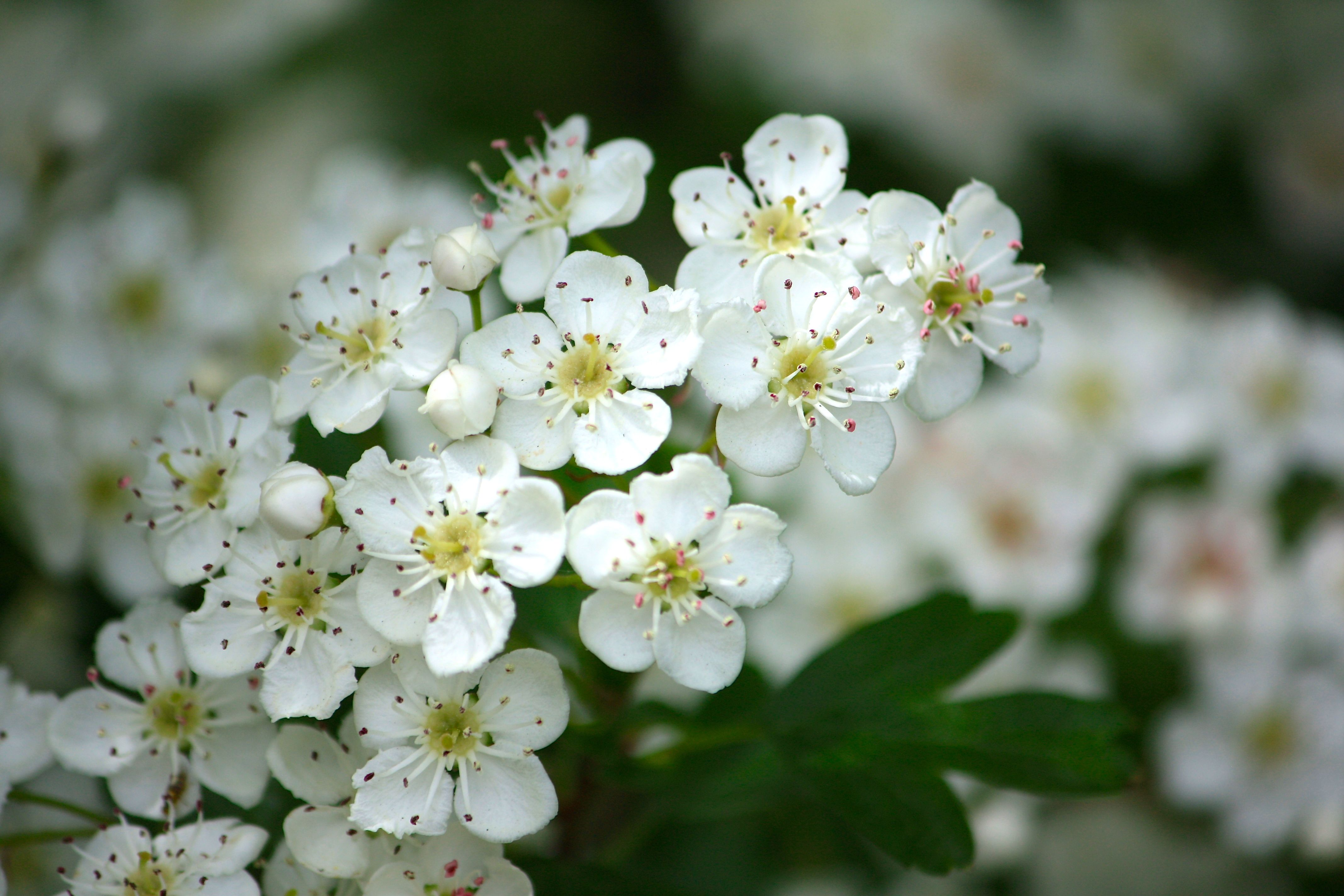 White flowers names google search lovely florals pinterest white flowers names google search mightylinksfo