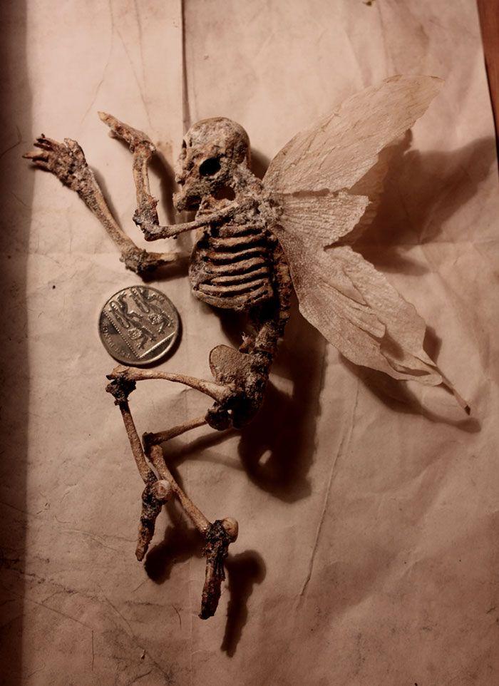 strange skeletons found in the basement of old london home of, Skeleton