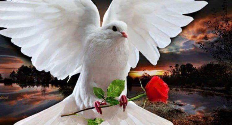 رؤية الحمام في المنام لابن سيرين Dove Images Cross Paintings Animals