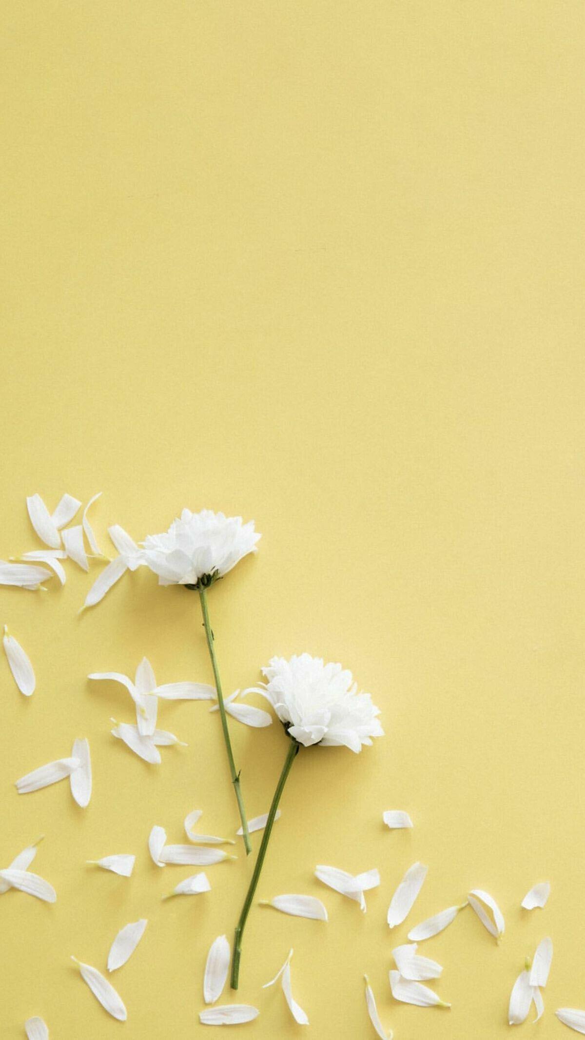 Pin Di Wallpaper Bunga 1