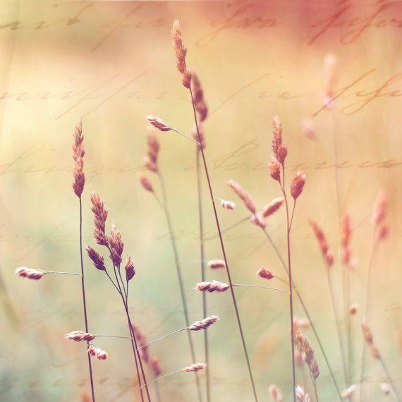 Framed Art, Framed Photography, Framed Print, Nature Art, Home Decor ...