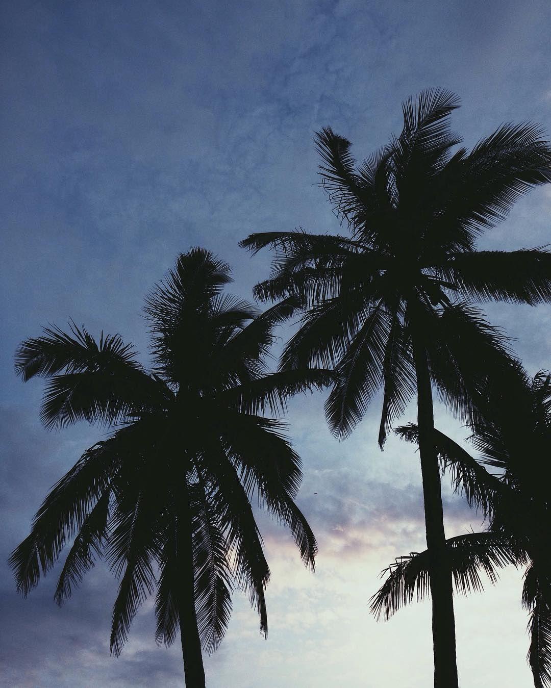 #paradis #palmtrese #sunset #summer #blue #lover #tropical #addict #etangsalé #nature #lareunion #974island #islandlife by li_ozawa_flood