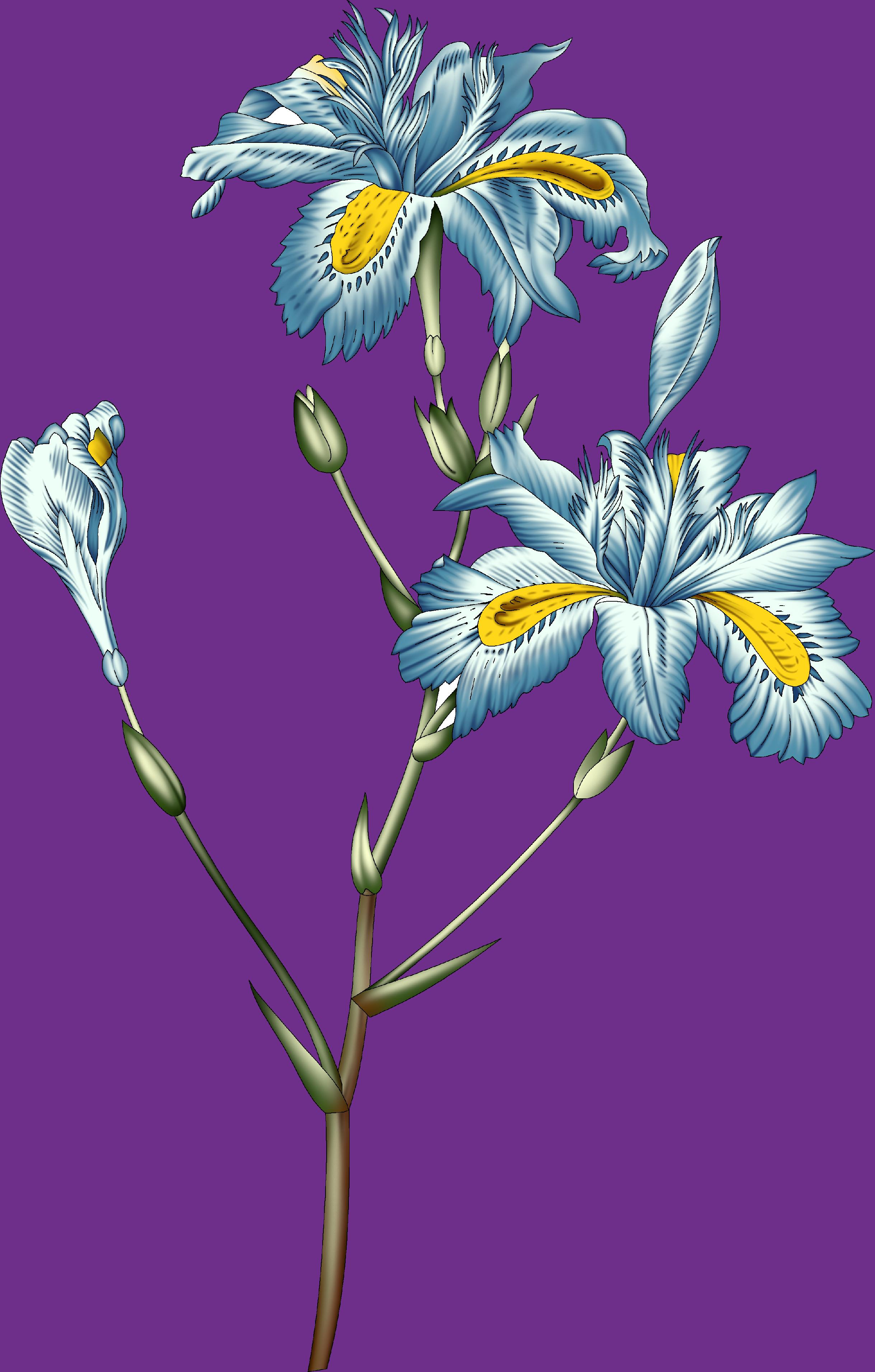 Pin By Hummaira Ali On Flower In 2020 Abstract Flowers Digital Flowers Flower Art