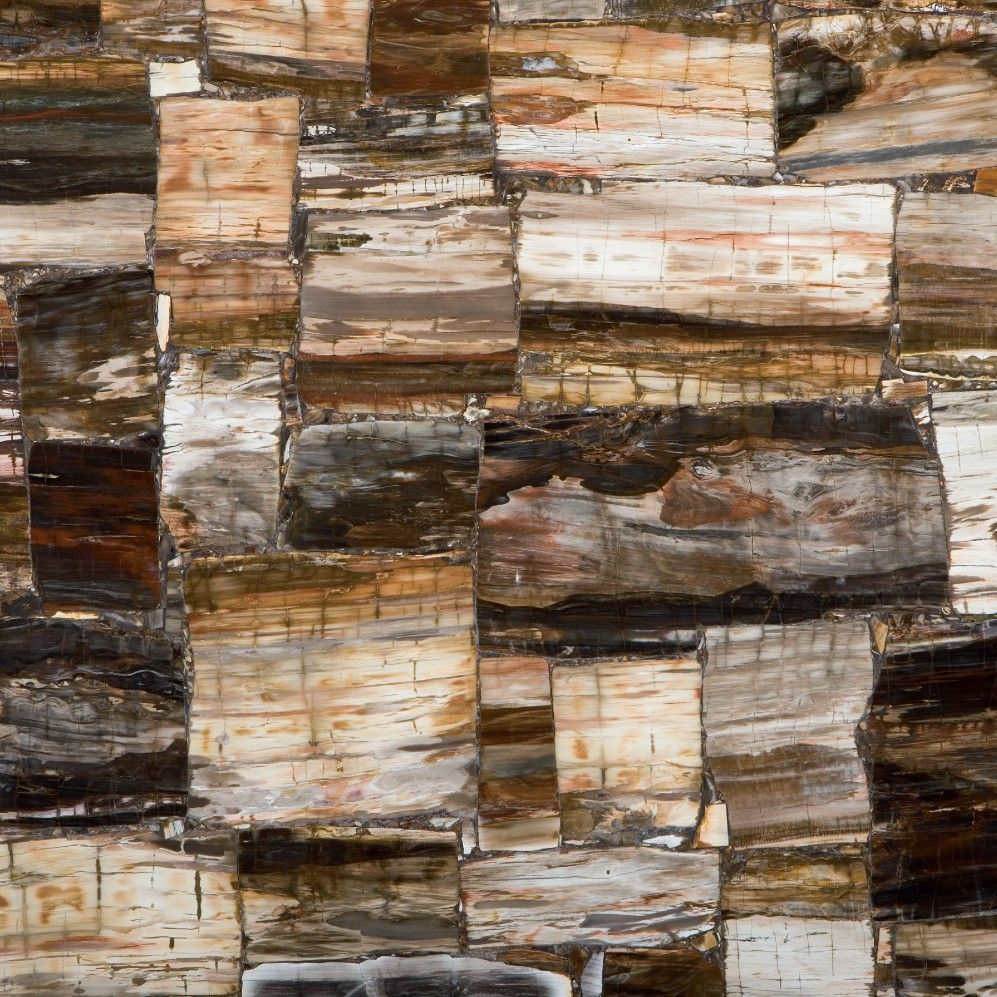 Serious Stones Concetto Countertops Petrified Wood Wood Wood