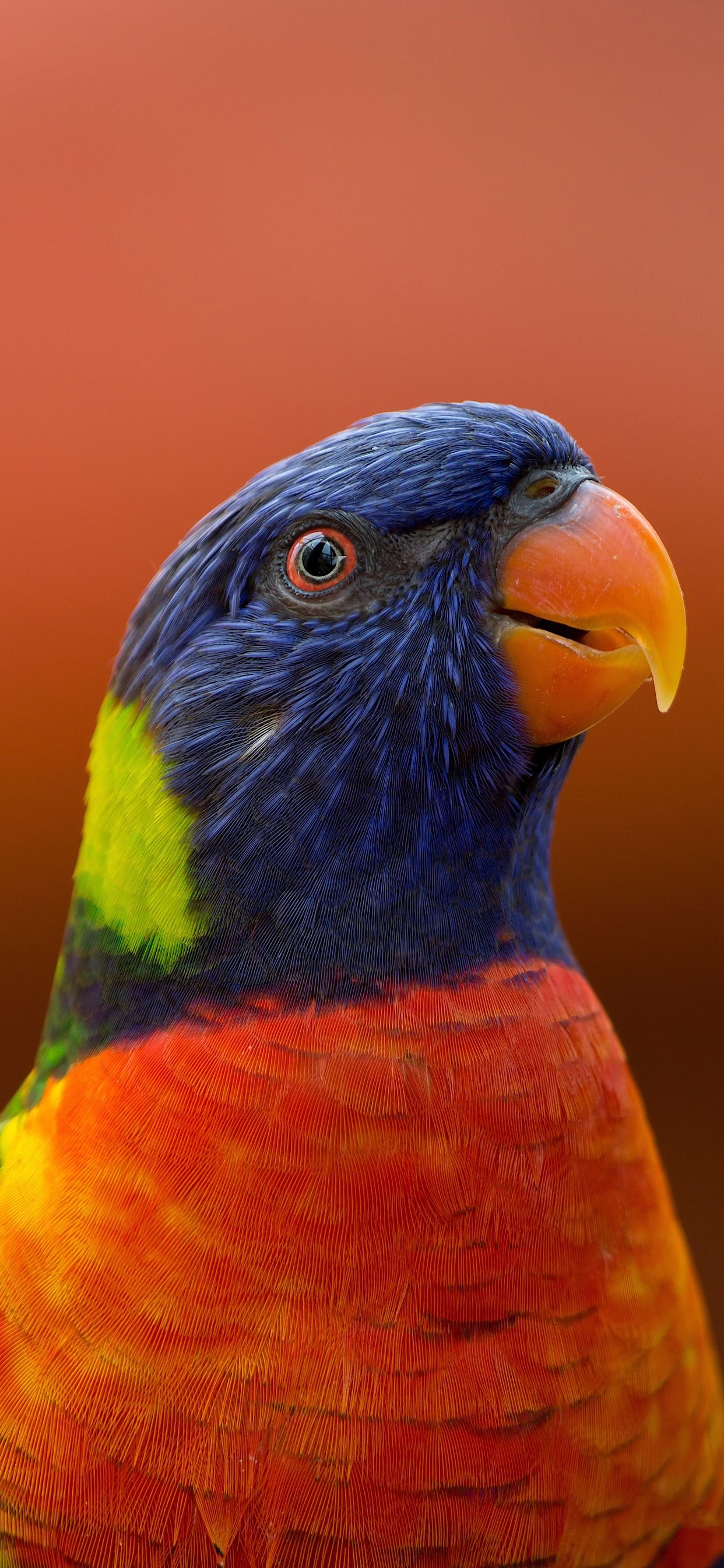 Pin by Iphone Xs Max Wallpapers on Birds Close up
