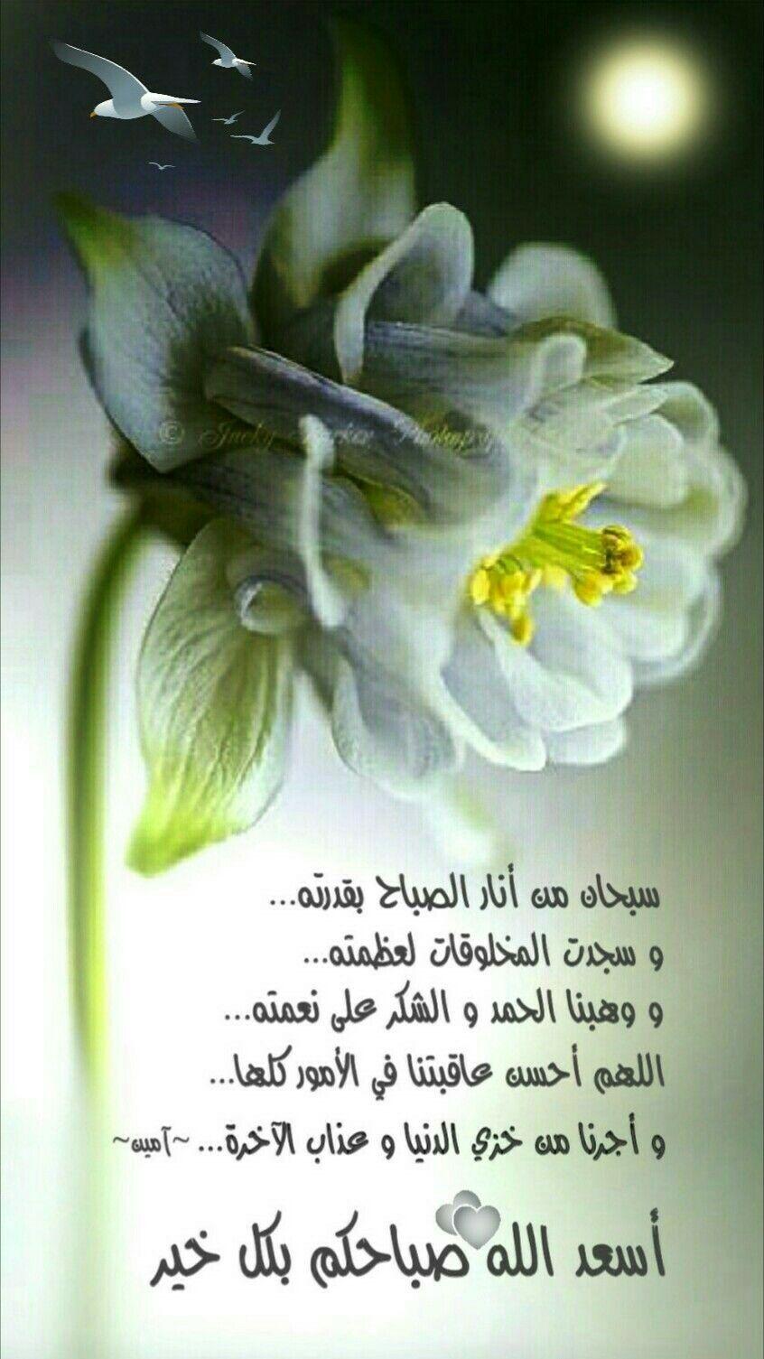 صباحات Good Morning Photos Good Morning Arabic Good Morning Images