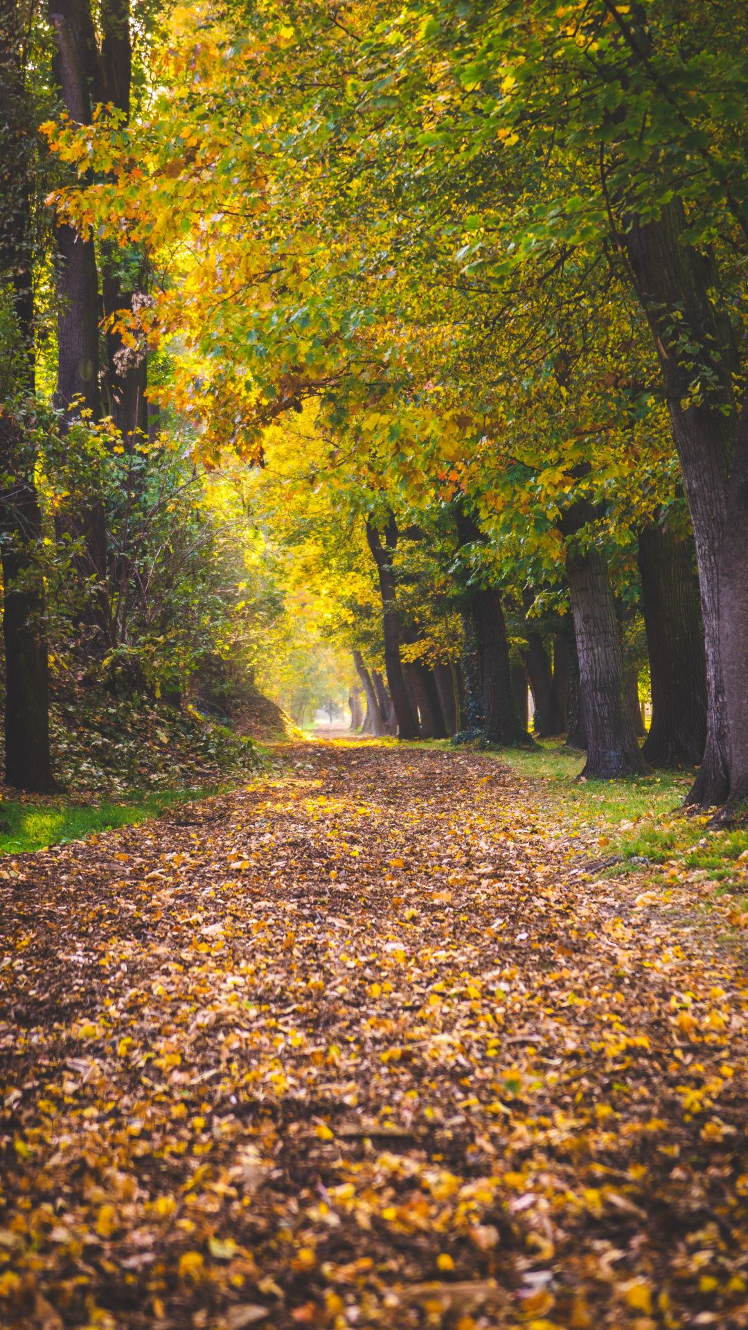 Wallpapers natural landscape, forest, deciduous, leaf