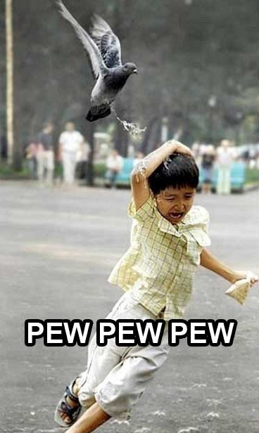 Bird Taking A Sh T On A Little Boy Funny Animals Funny Kids