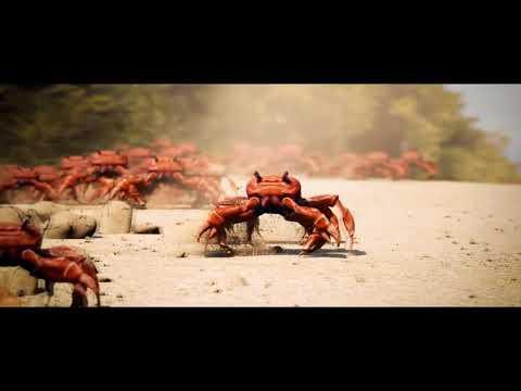 Dancing Crab Meme Maker - apsgeyser