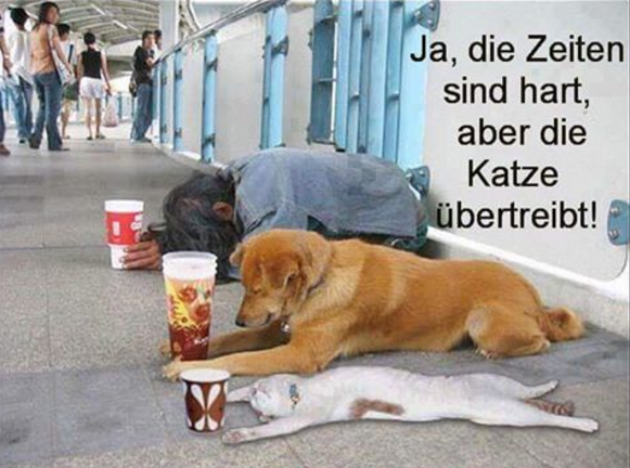 Pin by Ute Pfaff on Lustiges und Zitate | Funny, Funny animals ...
