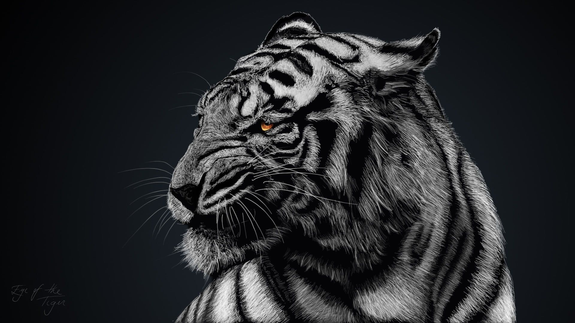 Gray And Black Tiger Greyscale Photo Of Tiger Animals Tiger White Tigers Nature 1080p Wallpaper Hdwallpaper Tiger Wallpaper Tiger Artwork Tiger Images