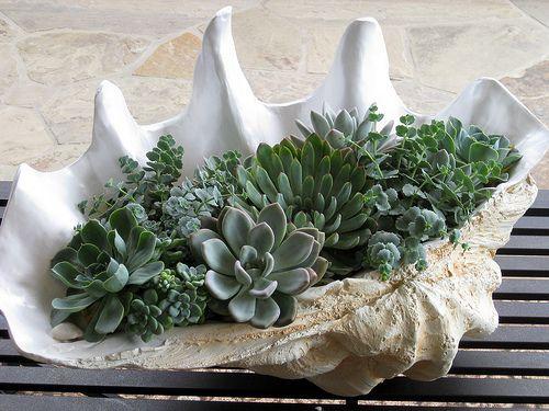 Succulents | Echeverias and Crassulas | David Pedersen Landscape Architecture & Design in | Flickr