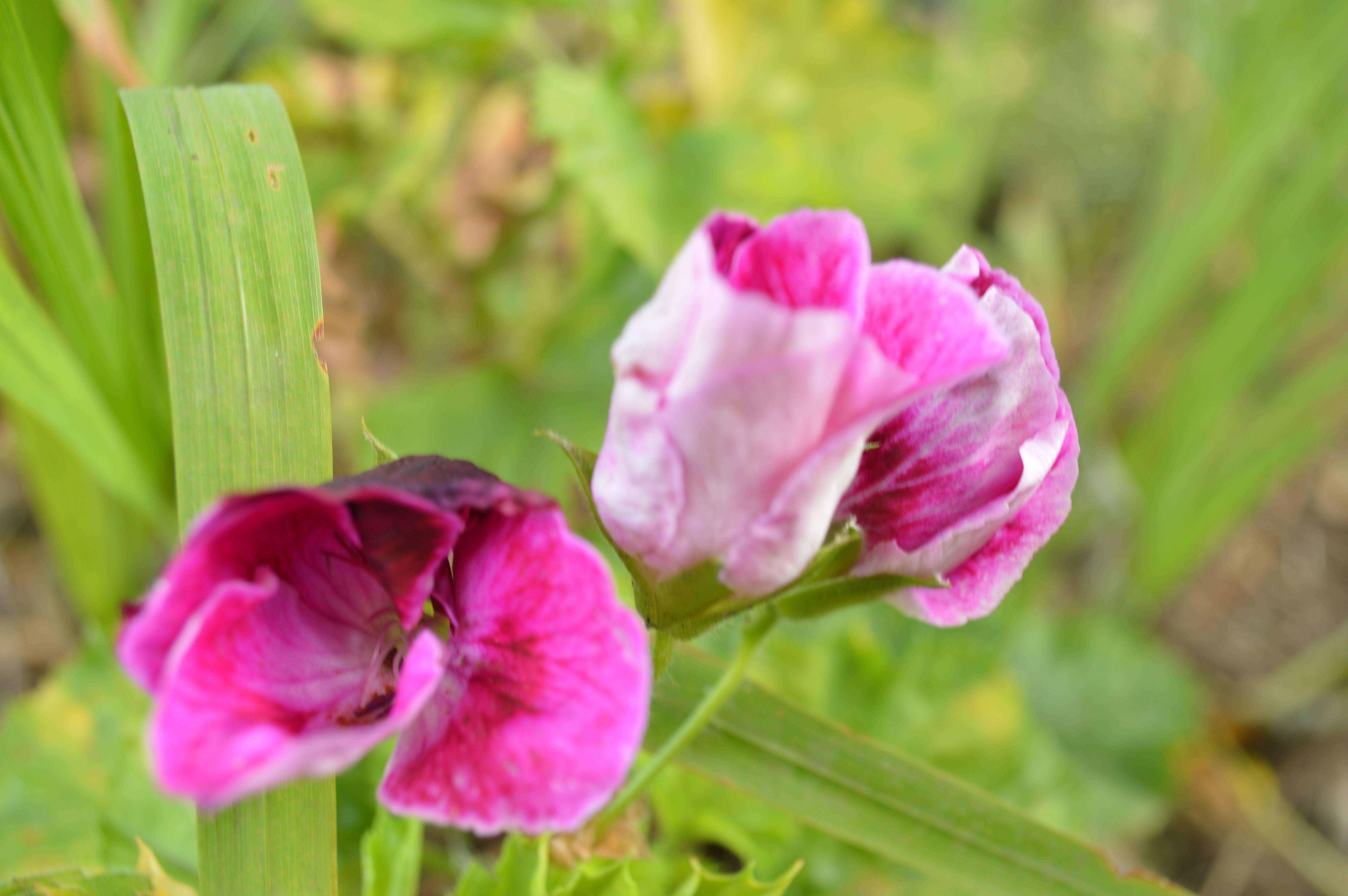 Flores en Cogua, Colombia