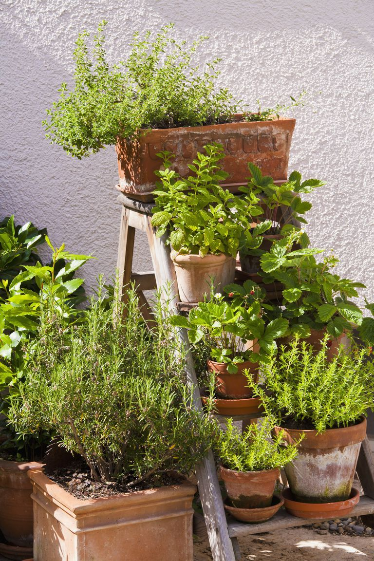 Photo of 9 ways to transform your small garden on a budget