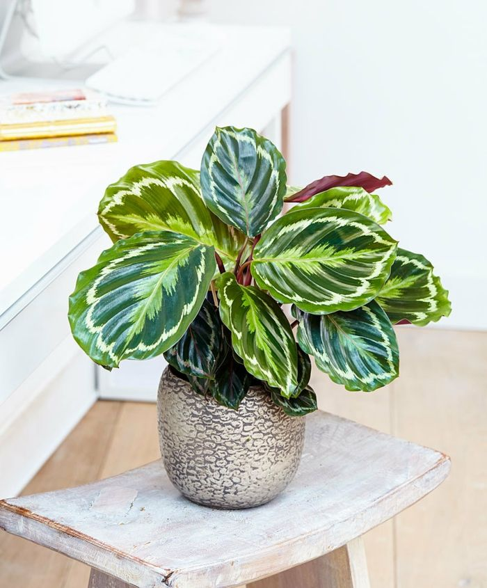 10 Schattenpflanzen für die dunkelsten Ecken zu Hause #plantsindoor