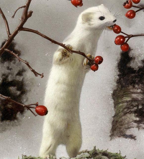 Ermine with Winter Coat | Animals beautiful, Animals